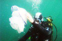 """Клуб подводного плавания """"Дельфин"""""""